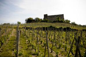 Le vignoble de Seyssuel